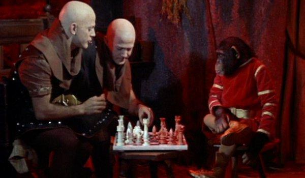 Les siamois et le chimpanzé