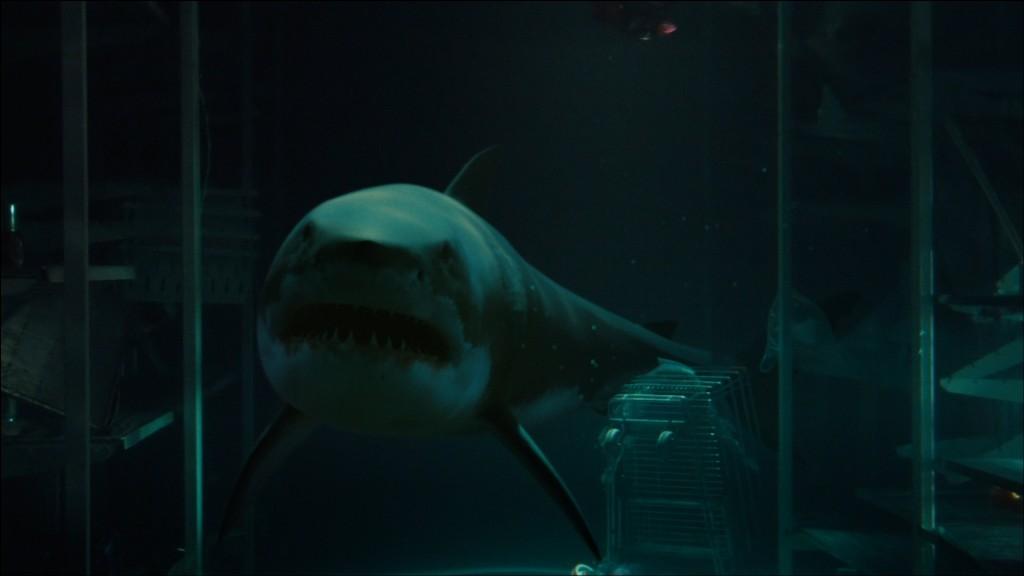 bait-movie-great-white-shark-underwater