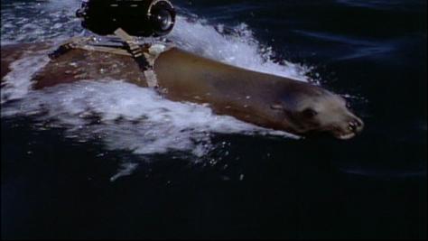 creature-seal