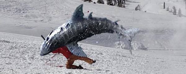 Avalanche-Sharks-2-640x344