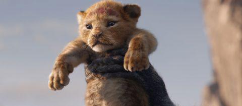 Le Roi Lion – Simba les Couilles