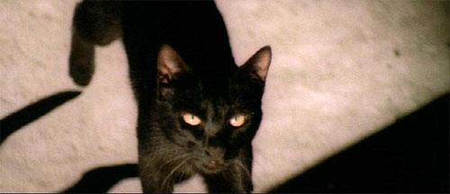 black_cat_81_01